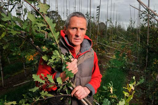 Joe Ahern owner Fána Tree Nursery, Ballyhooly, north Cork where between 7,000 and 10,000 trees were destroyed in Storm Ophelia. Pic Daragh Mc Sweeney/Provision