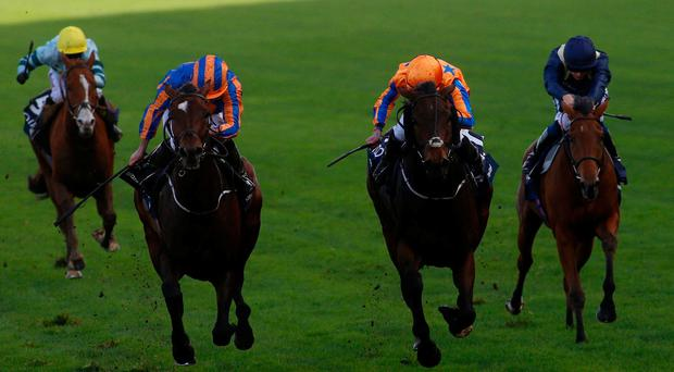Order of St George and Ryan Moore (left) wins The QIPCO British Champions Long Distance Cup race run during Qipco British Champions Day at Ascot Racecourse