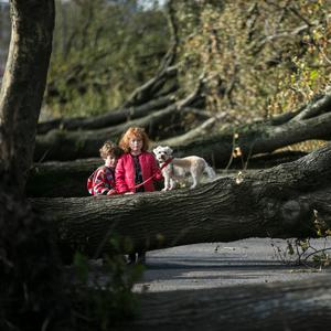EXPLORING THE DAMAGE: After a scary couple of days indoors Elsa (7) and Tom (5) Dollard and their dog from Centre Park Road, Cork inspect the fallout of Hurricane Ophelia including the downing of dozens of 100 year old trees. Photo: Mark Condren