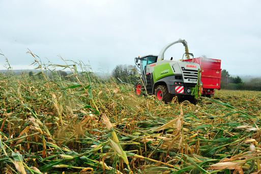 Maize harvesting has been badly affected by the recent storms, with growers in the southern half of the country hardest hit. Our picture shows contractor Alan Lucas cutting maize in Ballymacormack, Co Carlow. Photo: Roger Jones