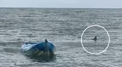 The shark followed the kayak for 10 minutes after it attacked the 15-year-old in South Australia. Photograph: Channel 7