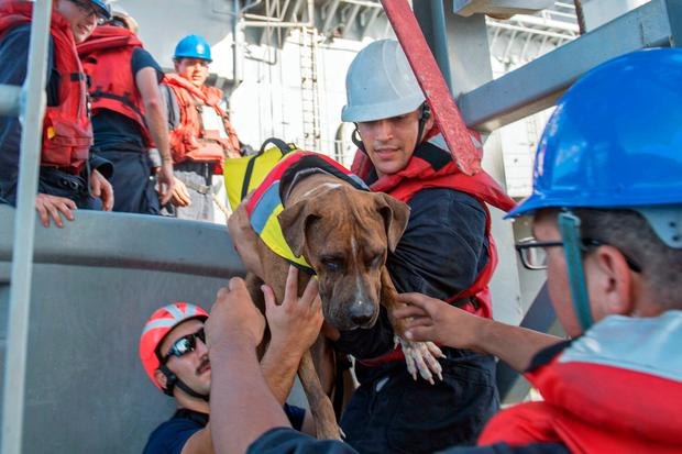 USS Ashland sailors help Zeus, one of two dogs who were accompanying two Honolulu women who were rescued after being lost at sea for several months while trying to sail from Hawaii to Tahiti. The U.S. Navy rescued the women on Wednesday after a Taiwanese fishing vessel spotted them about 900 miles southeast of Japan on Tuesday and alerted the U.S. Coast Guard. The women, identified by the Navy as Jennifer Appel and Tasha Fuiaba, lost their engine in bad weather in late May, but believed they could still reach Tahiti. (Mass Communication Specialist 3rd Class Jonathan Clay/U.S. Navy via AP)