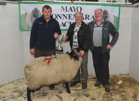 Mayo/Connemara Sheep Show of Blackface Rams: 1st place Hogget Ram Michael O' Neill, Tuar Mhic Eadaigh collecting his prize from Stephen Grealis and Seamus Joyce. Photo: Conor McKeown
