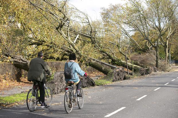 Fallen trees on Centre Park Road after Hurricane Ophelia. Photo: Mark Condren