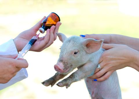 Farmers have been urged to curb the use of antibiotics. Stock picture