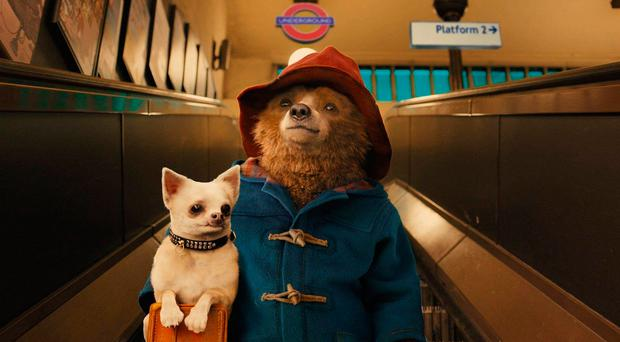 Bear necessity: Only an almighty grump wouldn't fall for Paddington