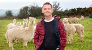 Departing RTE newsreader Aengus Mac Grianna at the Co Meath alpaca farm he shares with husband Terry Gill
