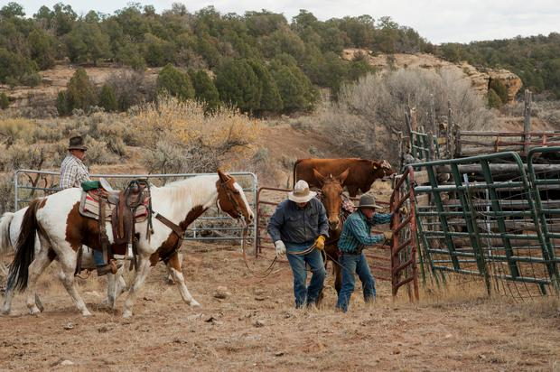 Ranchers close a gate after collecting cattle near Monticello, Utah, U.S., October 31, 2017. REUTERS/Andrew Cullen SEARCH