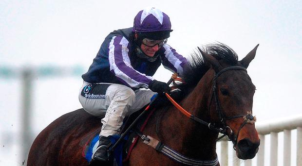Kylemore Lough will have his supporters if he runs at Cheltenham. Photo by Harry Trump/Getty Images