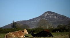 Cattle relax in the sun in a field in Wicklow, Ireland November 16, 2017. REUTERS/Clodagh Kilcoyne
