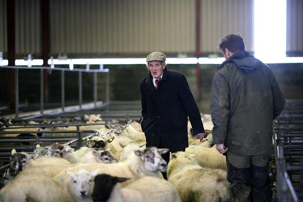 18/11/2017.Mountbellew Sheep Mart, Co. Galway. John Finneran from Taughmaconnell, Co Roscommon brings his sheep to the mart. Photo Brian Farrell