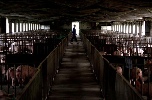 FILE PHOTO: A worker walks past pens containing pigs at a farm located on the outskirts of Beijing September 7, 2012. REUTERS/David Gray/File Photo