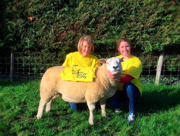 Vivienne & Jackie Ryan with Lot 11 for next Saturday's Texel Inlamb Ewe sale in Blessington Mart at 1.00m. All proceeds from the sale of this ewe will go to the Irish Cancer Society.
