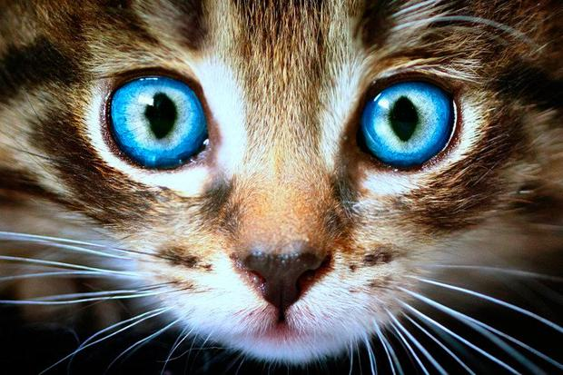 Vision: Cats' eyes adjust to changing light