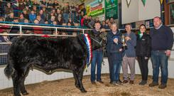 The supreme champion at Skibbereen fatstock show and sale a Belgian Blue Limousin cross beef heifer weighing 725 kilos sold for €2,400 is pictured with owner Mervyn Busteed, Lisapooka, Bandon, David Shields, Drinagh Coop, overall sponsor, Joshua Busteed, Bandon, Abraham Kingston, mart chairman, Orla Lynch, FBD, class sponsor & Michael O'Regan, Skibbereen, buyer. Photo O'Gorman Photography.