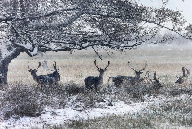 There is a chance of snow sticking in Dublin and north Leinster. AP Photo