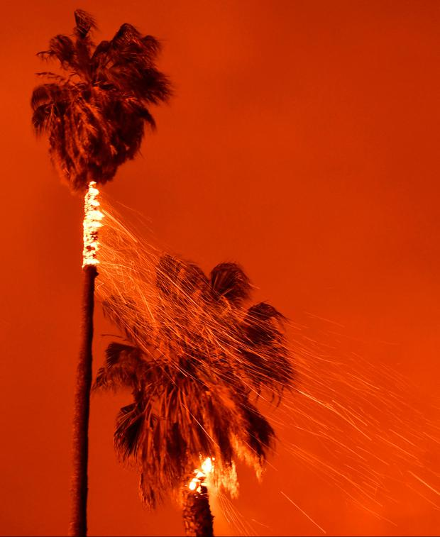 Palm trees catch fire as firefighters battle a Santa Ana wind-driven brush fire called the Thomas Fire near Ventura, California, December 5, 2017. REUTERS/Gene Blevins
