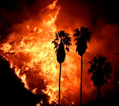 Flames tower over palm trees from a Santa Ana wind-driven brush fire called the Thomas Fire near Ventura, California, December 5, 2017. REUTERS/Gene Blevins