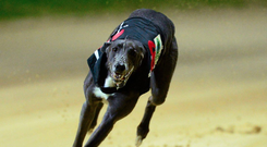 Liam Dowling's Coolavanny Pet has been mixing with the best all season and is still running at the top of her game. (stock picture)