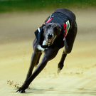 The final of the Comerford Cakes Open 525 is set to take place at Shelbourne Park this evening (stock picture)