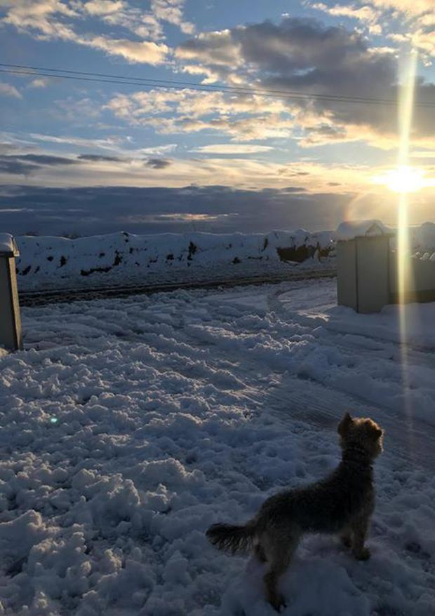Gerard Heneghan took this picture at his home in Clonberne, County Galway of his dog Riley
