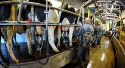 The milking parlour was powerwashed. File photo