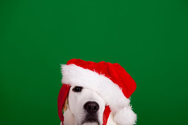 Santa Paws! How To Look After Your Dog This Christmas