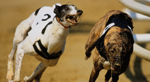 On semi-final form, the Paul Hennessy-trained Jaytee has some eight lengths in hand over his final opponents. Photo: Stock Image