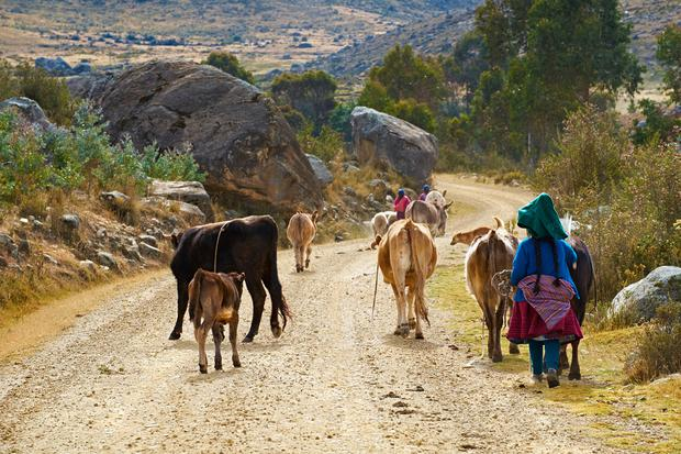 Andean family taking their live stock to grazing pastures in the Andes, Peru, South America. Depositphotos.
