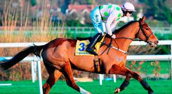 Faugheen, with Paul Townend up, about to be pulled up. Photo: Sportsfile