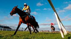 Next Destination ridden by Paul Townend wins The Lawlor's of Naas Novice Hurdle during Winter Ladies Day at Naas