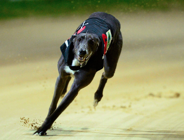 A trap-one draw looks ideal for Jaytee Yankee in Heat 2 (stock picture)