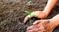 Our soil is absorbing what the elements throw at it at the moment