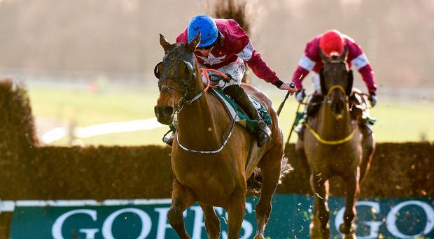 Image result for Monbeg Notorious HORSE