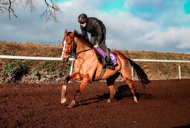 Willie Mullins wonders whether Faugheen, pictured with John Codd on board at Closutton, may 'have been doing too much' ahead of his Christmas disappointment at Leopardstown. Photo: Patrick McCann