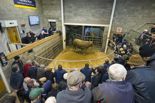 27/01/2018. Pictured at the Show and Sale at Carnew Mart, Carnew, Co. Wicklow. Picture: Patrick Browne