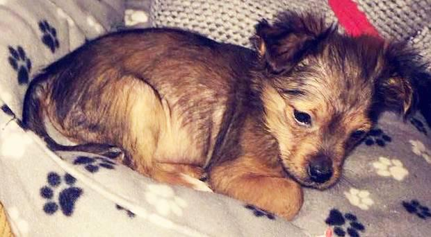 A picture of the 11-week-old puppy has been circulating on social media.