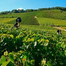 May or June is the best time to visit Champagne