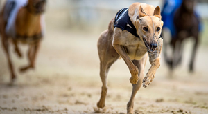 Weather proved a major problem on the second day of the National Coursing Meeting at Powerstown Park yesterday but the full programme was completed well before the light failed. (stock picture)