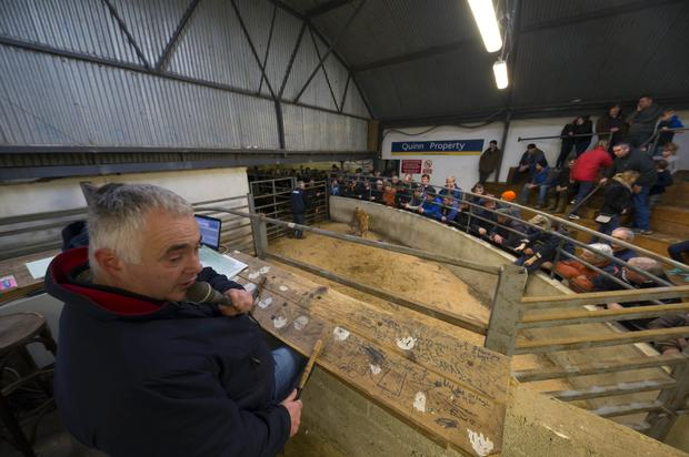 Pictured at the Show and Sale at Carnew Mart, Carnew, Co. Wicklow. Pictured is Myles Lambert auctioneer during the calf sale. Picture: Patrick Browne