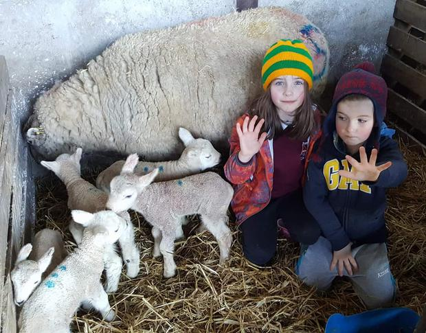 Aishling and Donnacha O'Connor with the quintuplet lambs in Galway.