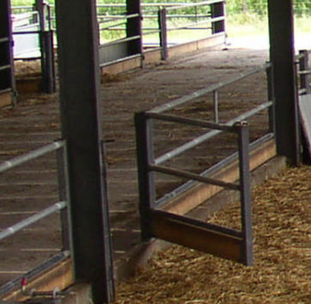 Step By Step Guide To Making Your Sheep Shed Work For You Farming