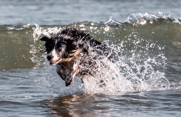 Collie enjoys the mild spring weather at at Fountainstown Beach in Co Cork. Photo: David Creedon