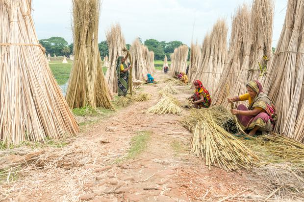 People are processing jute on in Dhaka, Bangladesh
