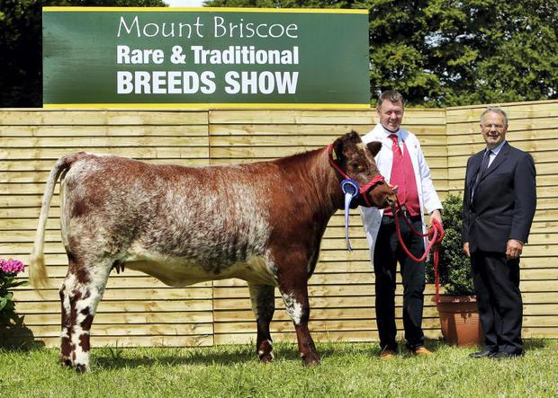 Mt B Rare Breed Show Shorthorn Breeder Tommy Staunton Reserve Champion Judge Percy Chadwick