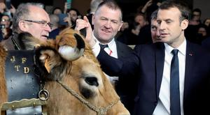 French President Emmanuel Macron touches an Aubrac breed cow as he visits the 55th International Agriculture Fair (Salon de l'Agriculture) in Paris, France, February 24, 2018. REUTERS/Ludovic Marin/Pool