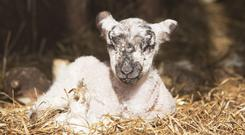 """If you have any livestock out in fields, young lambs in particular, it could be very bad for them,"" - Met Eireann"