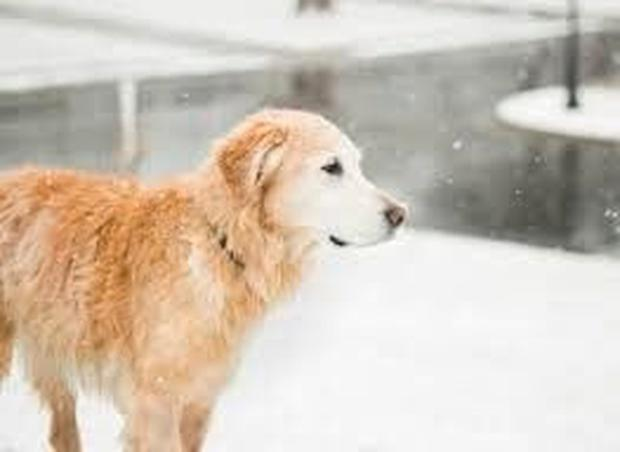 Dog in snow (Stock image)