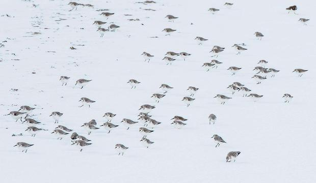 Birds in the snow. Photo credit: Dave Keegan Photography