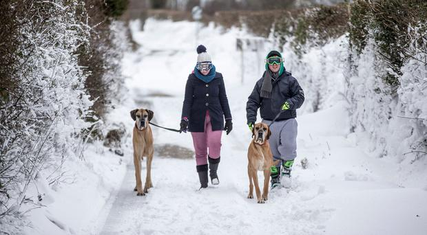 Keith Vaughan and Caoimhe Banks out for a walk with their Great Dames, Taz and Odin in Lusk, North County Dublin during Storm Emma. Photo :Mark Condren